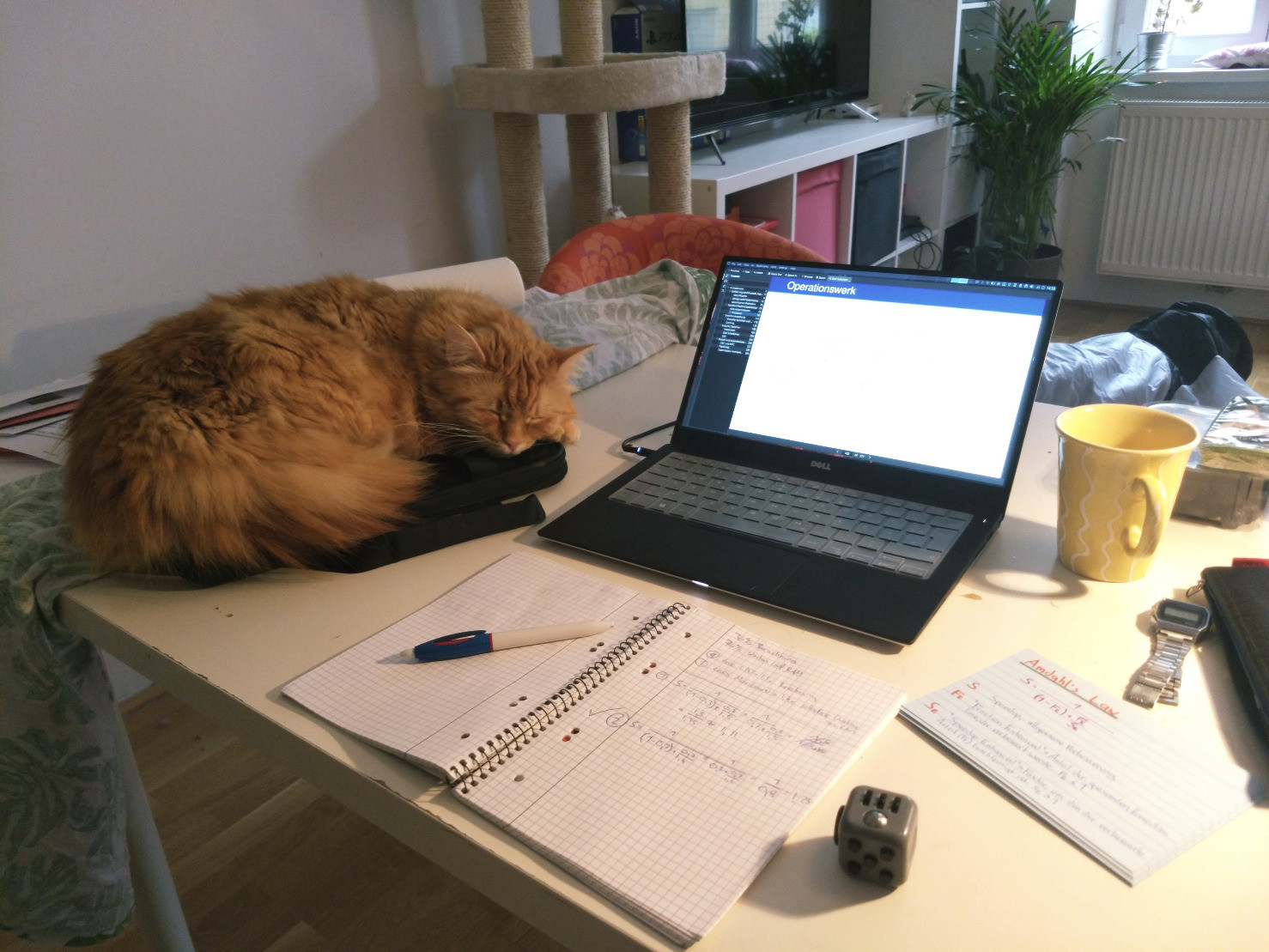 A giant red cat barely fitting on the laptop cover it sleeps on, next to a laptop, a notebook and other stuff I need to study, like some pens, a fidget cube and a cup of tea.